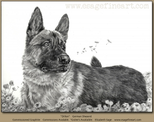 Dillon, German Shepherd