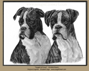 Boxers: Nugget and Prince